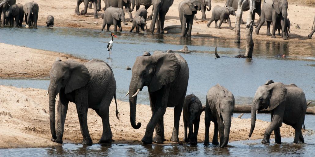 Sabi Sand Game Reserve elephants