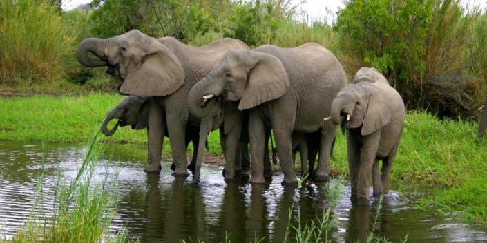 African Safaris Ulusaba