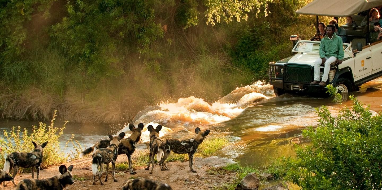 Morning Game Drive in Madikwe