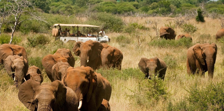 Elephant Herd at a Luxury African Safari