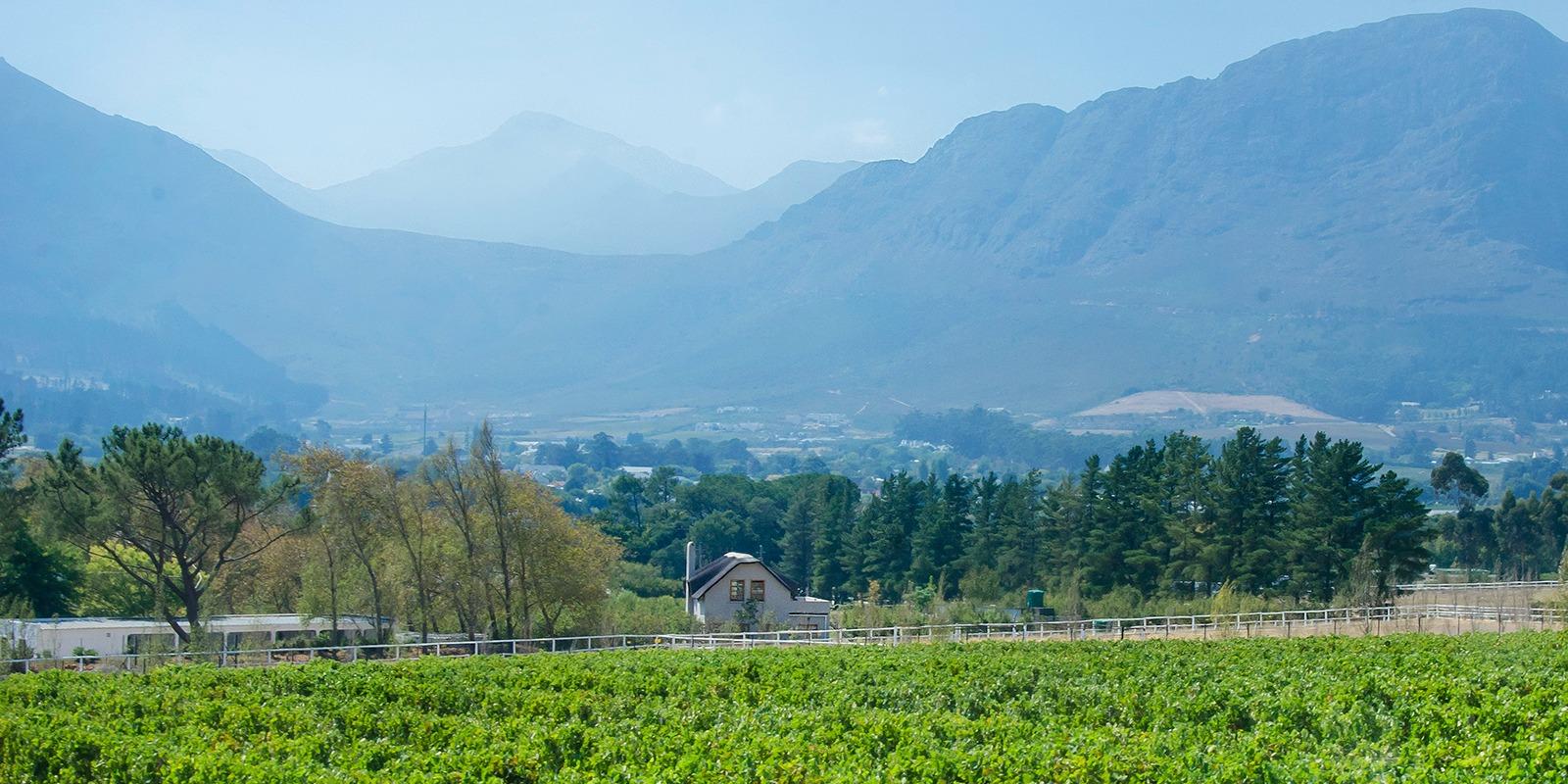 Mont Rochelle Vineyards in Franschhoek