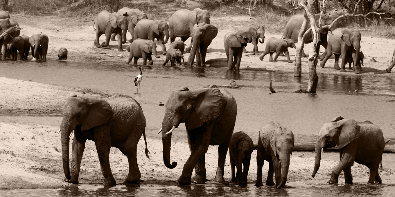 Ulusaba Elephants at a Watering Hole