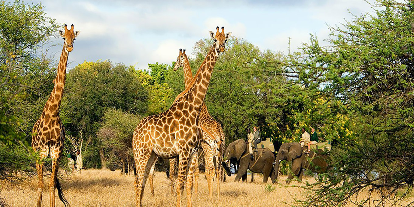 Luxury Safari in Kapama Game Reserve with elephants and giraffes