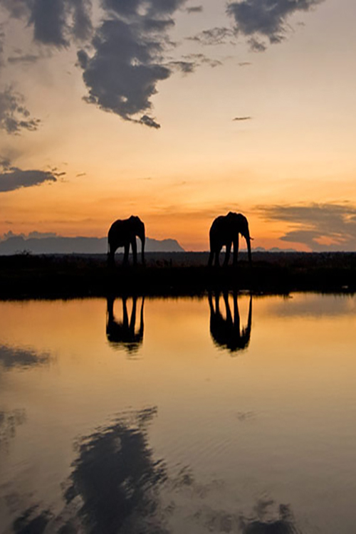 Elephants at sunset in Kapama Game Reserve